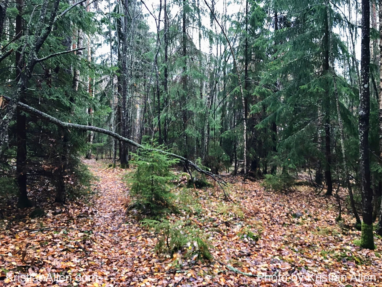 29.10.2017 10.12 km Sunday Run